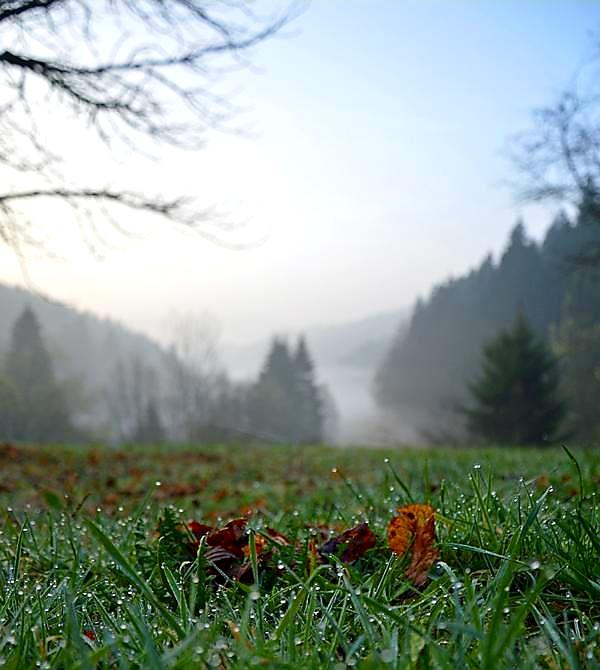 Der mystische Glaswald in Alpirsbach